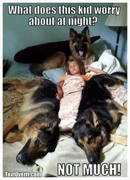 What does this kid worry about at night? Not much! #german #shepherd
