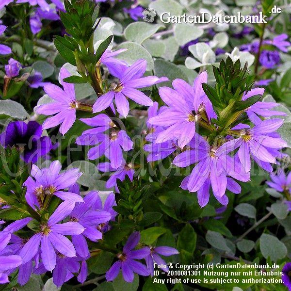 102 best Was blüht im - Herbst images on Pinterest | Blumen ...