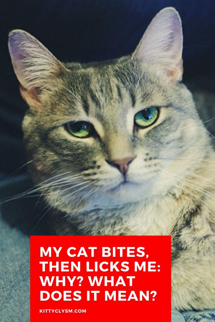 Pin by Ayşegül Yöney on Pisi Pisi )) Cats, Pretty cats