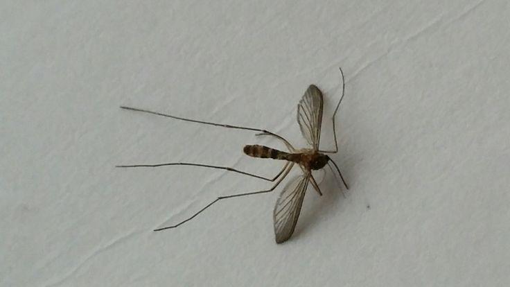 Ik ben ervan overtuigd dat het weghouden en verjagen van muggen, het beste middel tegen muggen is. Dit kun je doen met Mosquitoes ALT.