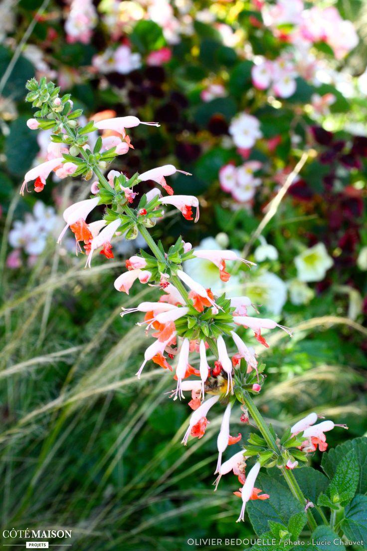 Une tige pleine de fleurs dans un jardin 1001 plantes d for Un jardin de fleurs