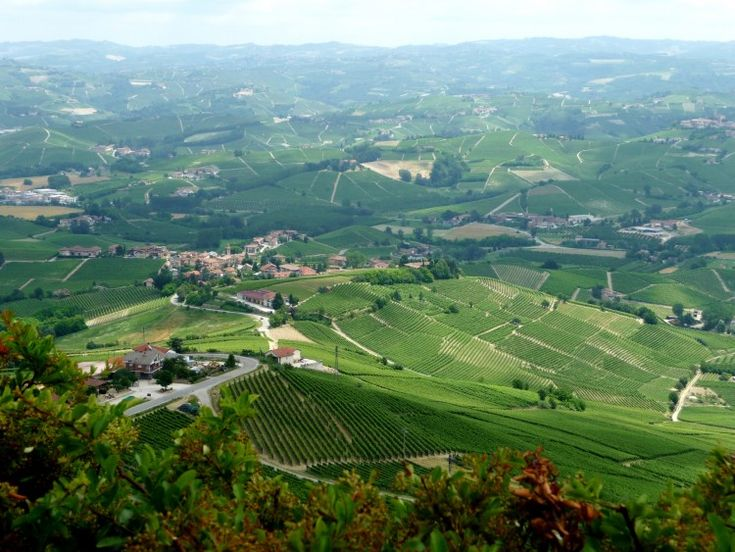 Explore Piedmont's Wine Roads