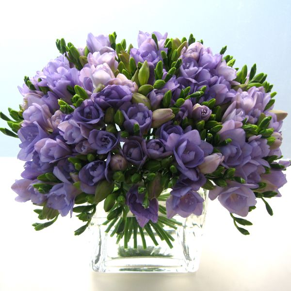 Freesia's would be a perfect wedding  table centerpiece because they are scented and go with the purple theme - lovely!