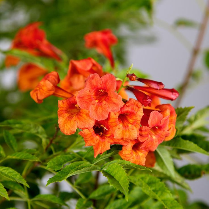 Plants that Attract Hummingbirds Plants that attract