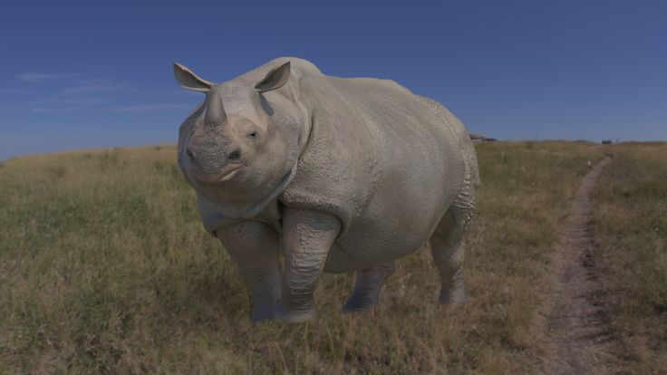 Indian Rhino 3D Model - 3D Model