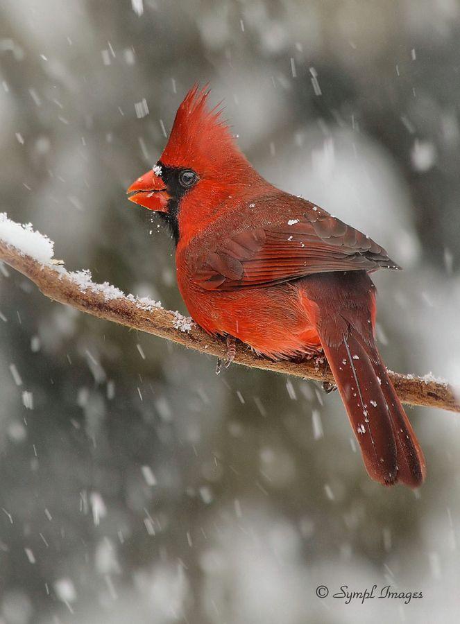 Winter Guest by Sympl  Images, via 500px