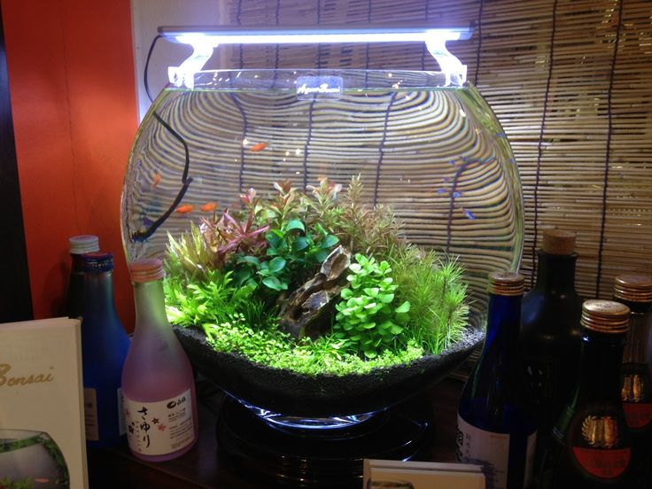 The 25 best round fish tank ideas on pinterest for Vase aquarium rond