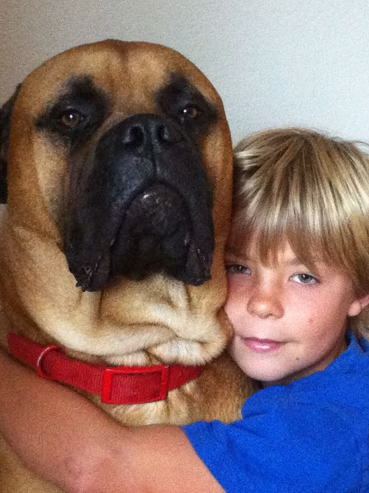 99 Best Images About Big Dogs On Pinterest Newfoundland