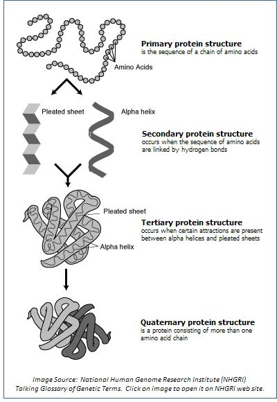 Collection Protein Structure Worksheet Photos - Studioxcess