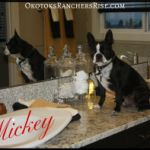 The bathrooms here at Ranchers' Rise are pristine, just like my behaviour! (Just don't ask my owner...) ~Love Mickey http://rgn.bz/V5js