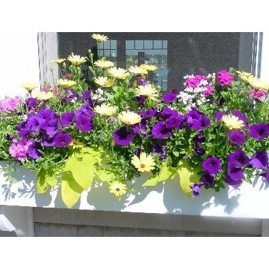 Next summer!  Window Boxes Design, Pictures, Remodel, Decor and Ideas - page 4