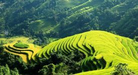Sapa Tours offers superb trekking to nearby hill tribe villages tucked within the terraced rice paddies, which is supposed to bring about unique adventuring experiences for Sapa tour packages. People booking Sapa tours are not only fascinated in the stunning natural mountainous landscape but curious about the diversified local culture here as well. https://welcomevietnamtour.wordpress.com/2015/11/12/how-to-prepare-for-sapa-tours-in-your-viet