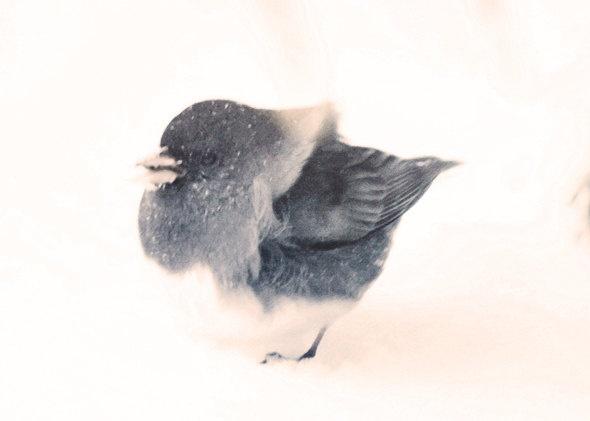 Cute bird in Snow photograph Print, black & white home decor - Little Tuffy 5 x 7. $14.00, via Etsy.