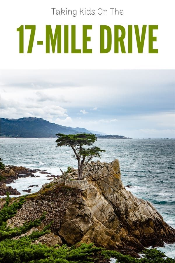 Taking Kids On The 17 Mile Drive California Travel California Vacation 17 Mile Drive