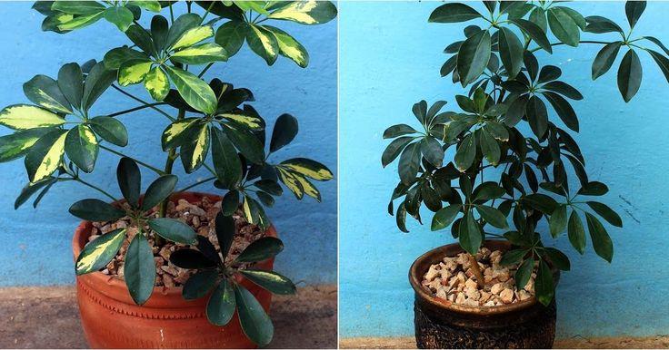 ¡Me encanta esta planta y quiero aprender a cuidarla!