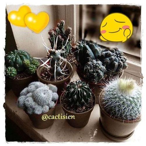 nuevos  rebutia, notocactus, stenocactus, echinopsis, tephrocactus, cereus, matucana