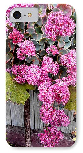 Pink Flowers IPhone 7 Case featuring the photograph Pink Blossom by Erika H