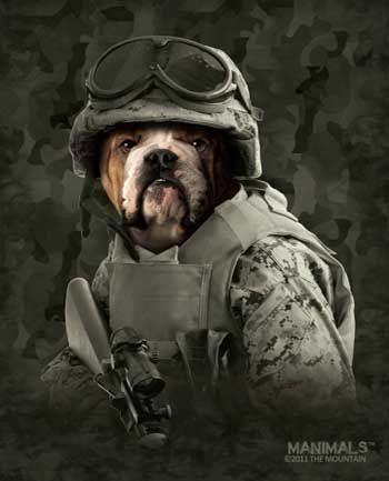 "Royal Plush Extra Heavy Queen Size Mink Blanket - Bulldog in Combat (79"" x 85"")"