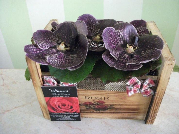Wooden box with#wanda#orchids
