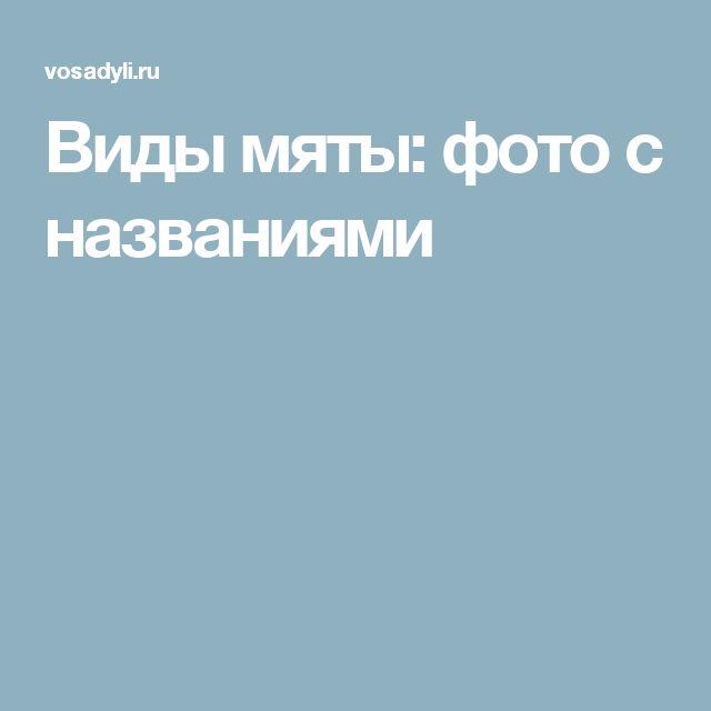 Виды мяты: фото с названиями