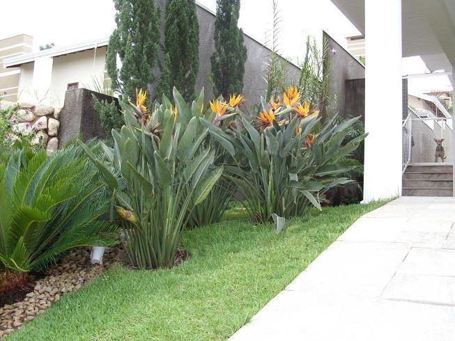 Dise o jardines tropicales dise o de interiores ideas - Disenos interiores de casas ...