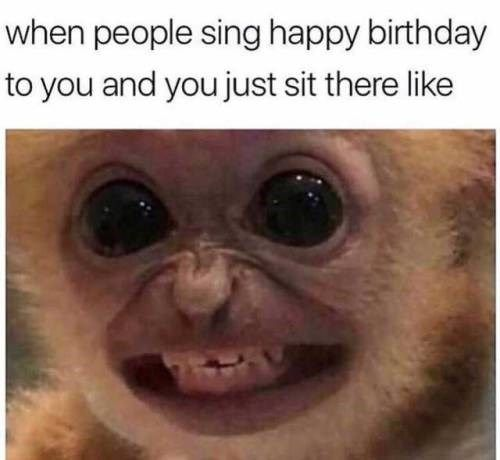 17 Fresh Animal Memes That Will Fill You With Joy In The Next Few Minutes