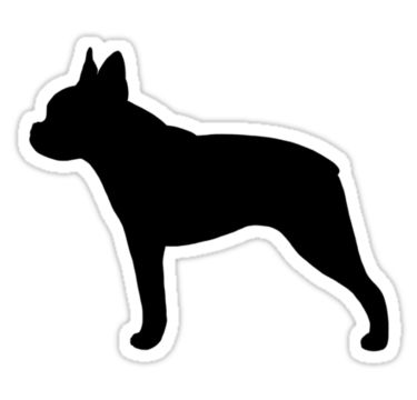 Boston Terrier Silhouette by Jenn Inashvili