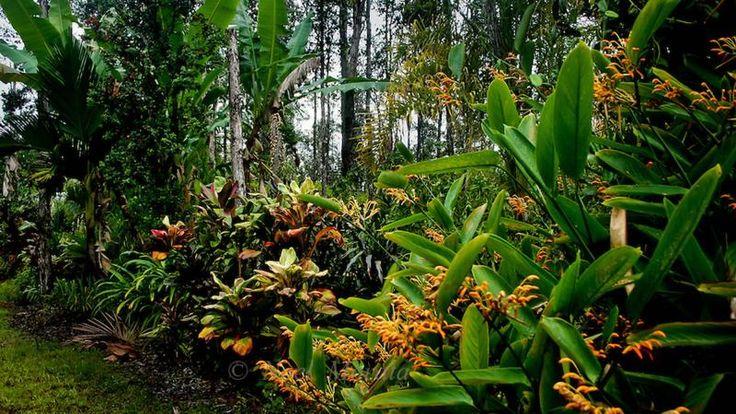 Hawaiian-Tropical-Garden-foliage