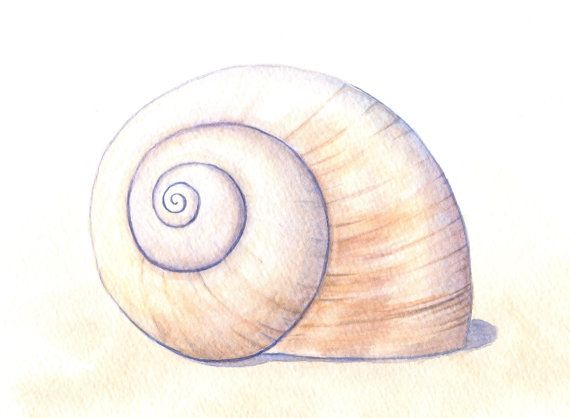 Seashell Painting Moon Snail Shell Art Beach by ABFoleyArtworks, $40.00
