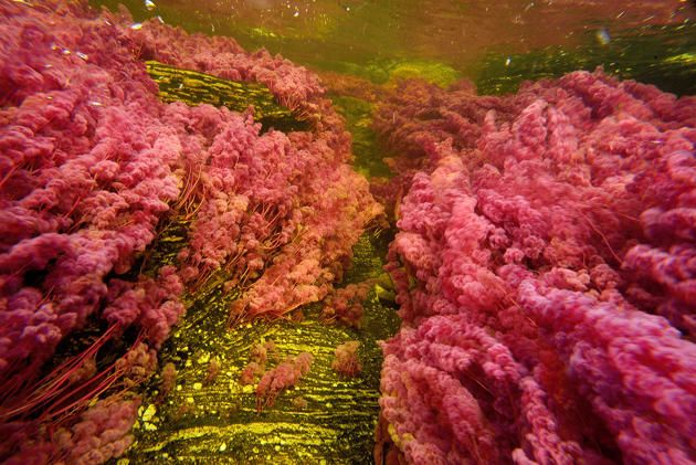 Cano Cristales - World's Most Beautiful River