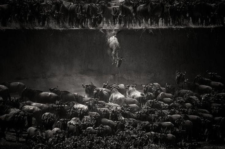 Siyah Beyaz Fotoğraflar