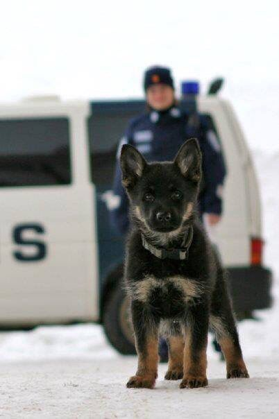 K-9, early version. Look out world, I'll soon be in charge!