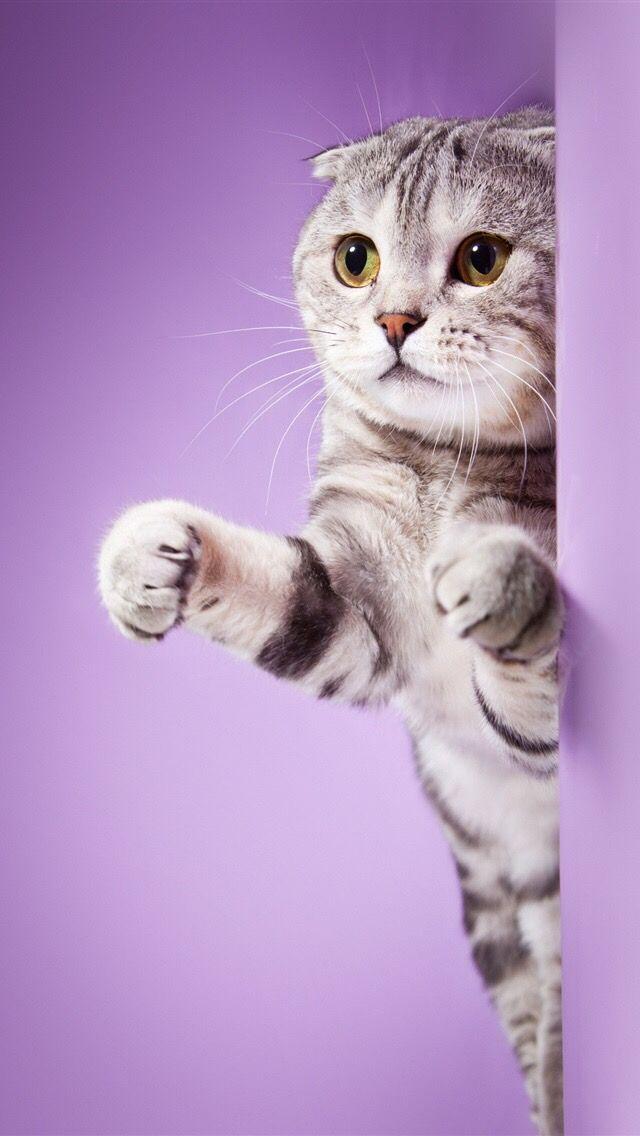 что помогаете прикольные котята картинки для айфон самое