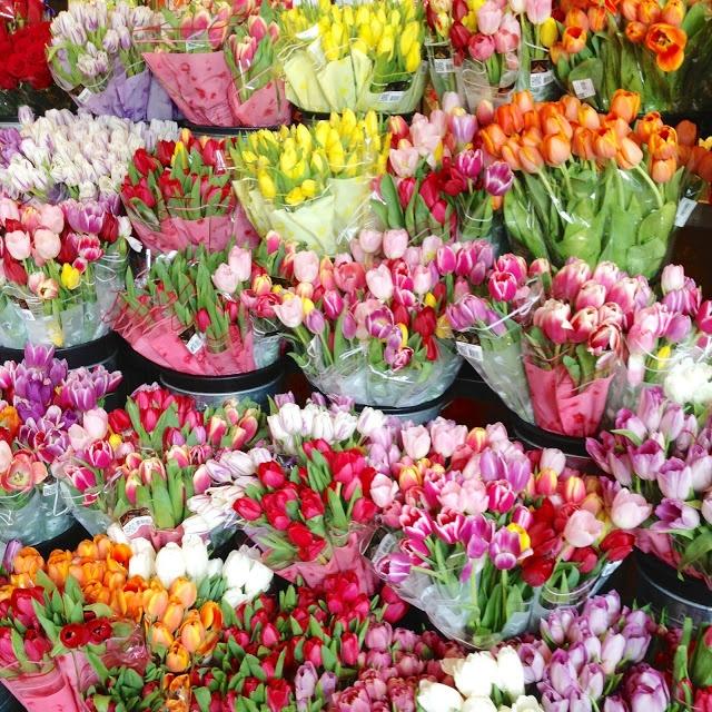 Top 25 best tulip season ideas on pinterest flowers for What season are tulips