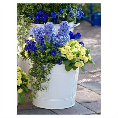 White container flowers gallery flower decoration ideas 201 best inspirational garden containers images on pinterest white metal container of hyacinthus primula belarina buttercup mightylinksfo
