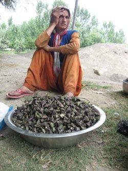 #Water #Chestnut #Kashmir Wullar Lake #Street #Food #India  #ekplate #ekplatewaterchestnut