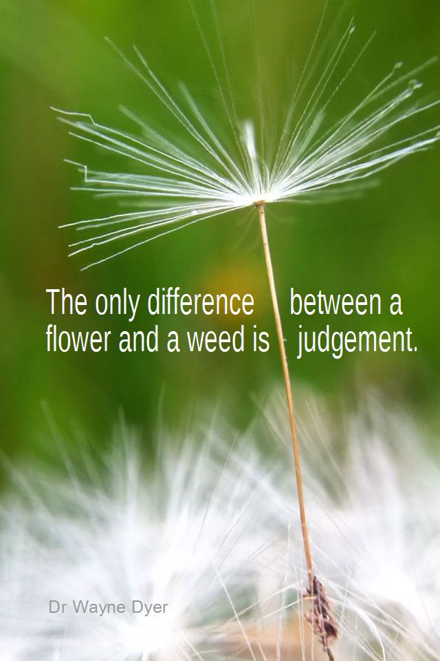 The only difference between a flower and a weed is a judgment. - Dr Wayne Dyer