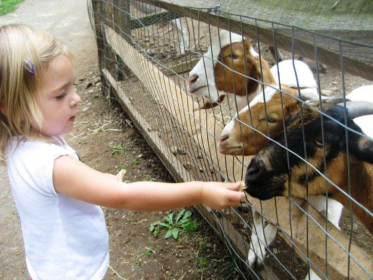 Barnyard Bash Party Baby animals, Animals, Zoo animals