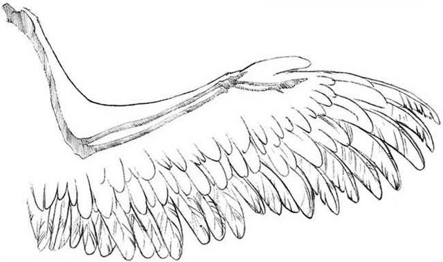 how to draw folded angel wings
