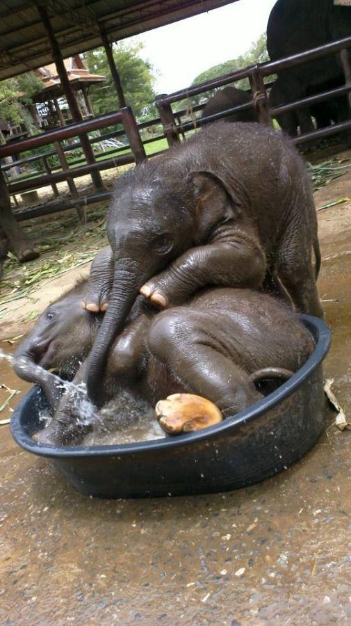 Cutest Baby Elephants Taking a Bath
