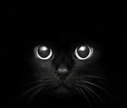 Gorgeous Black Kitty!: Black Cat My, Eye Catching Fetching, Cat Eyes, Big Eyes, Black Eyes, Black Cats, Baby