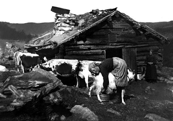 Nr. 1. Liastølen, Sangefjellet 1900. Kari Sandåker mjølkar. Utlånt av Knut Sandåker