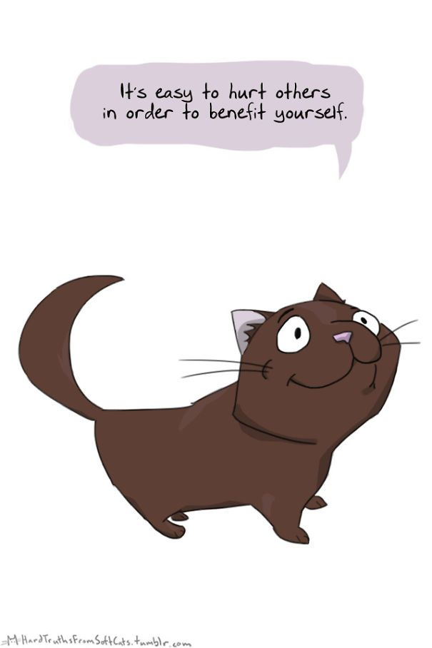 10+ Brutal Life Truths Told By Cute Cats Will Give You Mixed Feelings