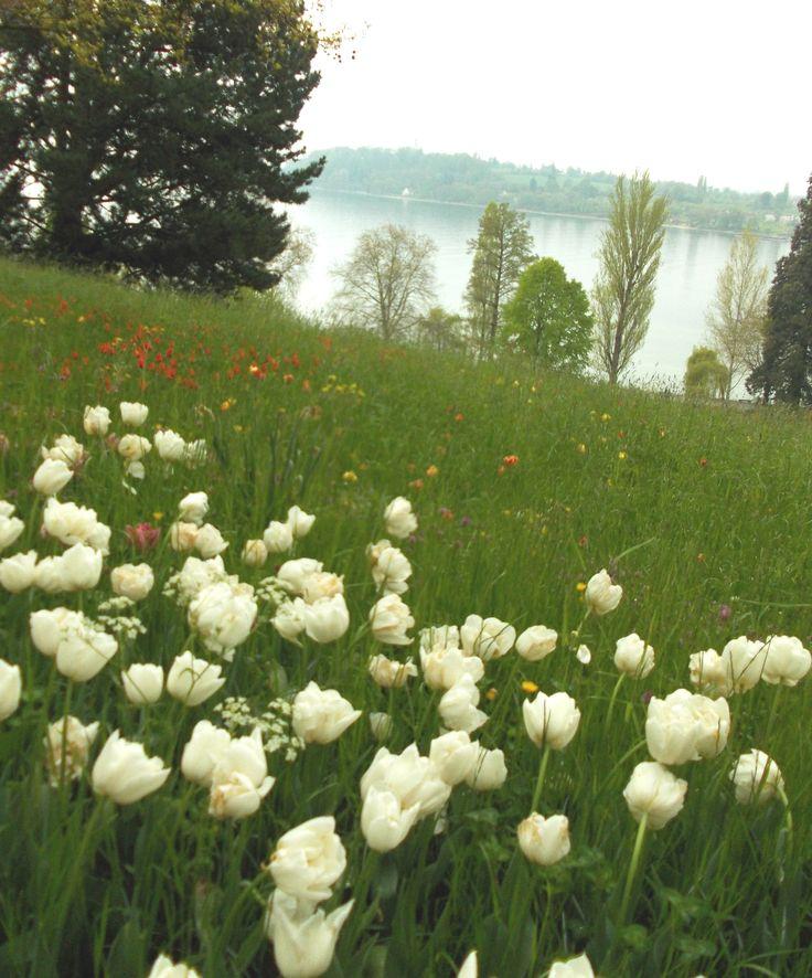 Frühling am Bodensee