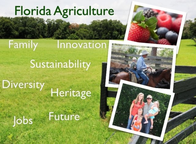 Florida Agriculture by Erin Freel - The Market Place- Ag Marketing and Video Production