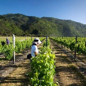 Private Wither Hills Wine Tour, Marlborough NZ - Molesworth Tour Company