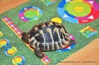 CARPETTHERAPY-DEA http://www.49lley.com/p/188/carpettherapy-dea