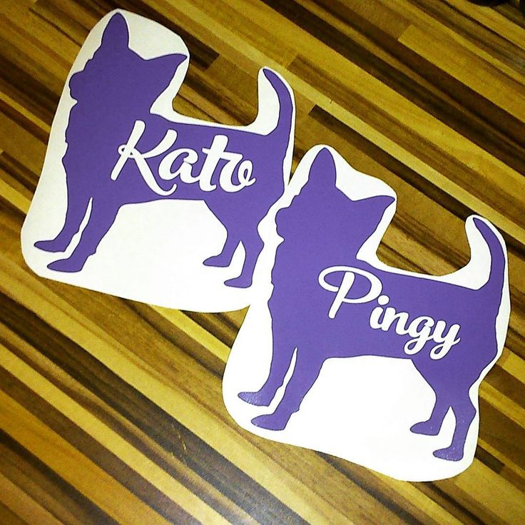 Nálepky se jmény | Stickers with names #kato #pingy #chihuahua #purple #stickers #names #dogsname #newsticker #civava #fialova #nalepky #jmena ##psijmeno #novenalepky #chihuahualove #carsticker #byblackberry #nalepkanaauto #odblackberry #made&cut@esjedna