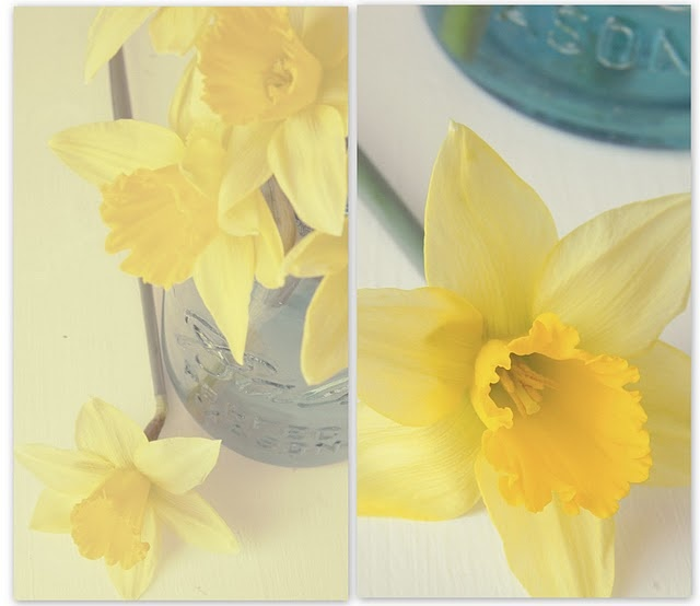 I love yellow daffodils- especially  after all the grayness of winter!