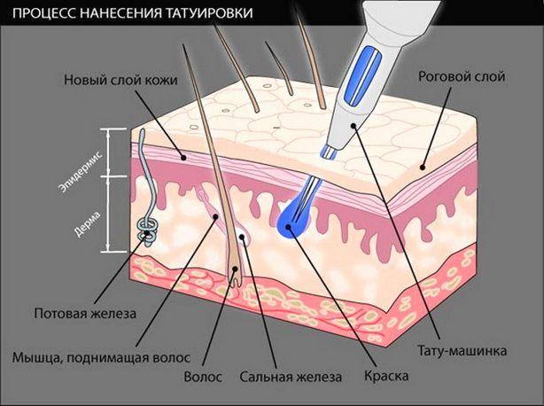 Кожа —  живой организм, наша самая важная одежда, «защитный скафандр» для пребывания на планете, который нам предстоит носить всю жизнь – от первого до последнего дня. http://estportal.com/samyj-bolshoj-chelovecheskij-organ/  #EstPortal #эстетическийПортал #косметология #лицо #анатомия #кожа #волосы